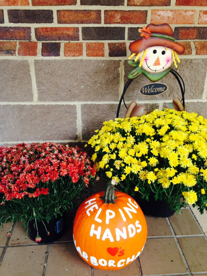 Mums and Pumpkins at HarborChase